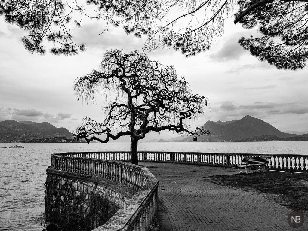 Silueta de árbol en el lago Maggiore